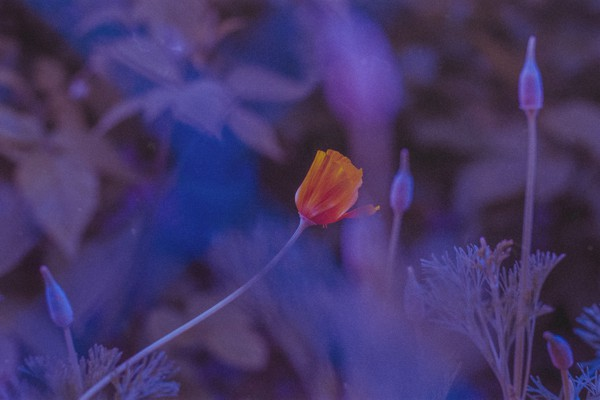 Distinguersi - Photography - Rebecca Bergonzi