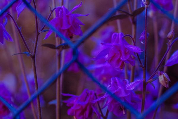 Amore in gabbia - Photography - Rebecca Bergonzi